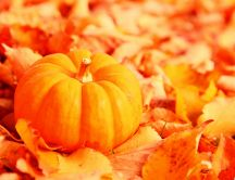 Beautiful pumpkin - autumn harvest and happy halloween
