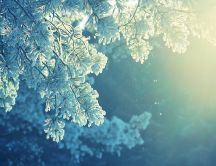 Sunny cold day - the nature in beautiful in the morning