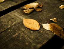 Autumn leaves on a bench of wood in the park