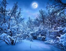 Blue winter night in the forest - Big moon