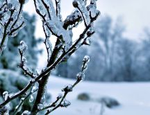 Frozen branches in a cold winter season - HD wallpaper