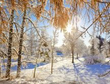 Beautiful sunny winter day - nature revives