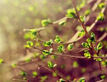 Beautiful green branches - tree in blossom - spring season