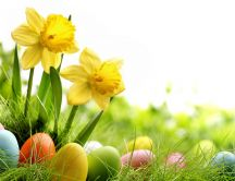 Yellow flowers and Easter eggs in the beautiful garden