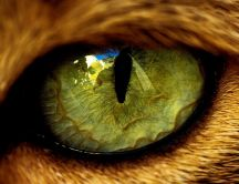 Big macro eye from a wild animal - HD wallpaper