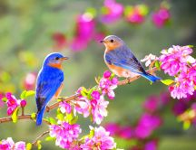 Lovely two little blue birds on a blossom branch