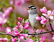 Bird on a blossom branch - spring season