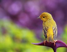 Beautiful little yellow bird - Spring season