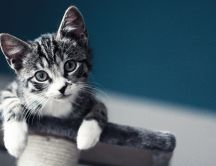 Curios little cat - HD wallpaper