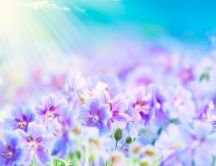Magic sunrise over the beautiful flowers - HD wallpaper