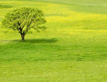 One green tree on a wonderful meadow - HD wallpaper