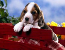 Sweet little puppy on the picnic - HD wallpaper