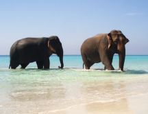 Two big elephants in the ocean water - Summer days