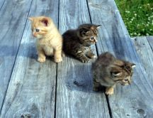 Three sweet little cats - HD animals wallpaper