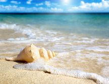 Wonderful shell on the ocean waves - HD wallpaper