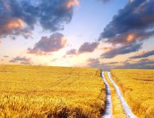 Country path through the golden wheat field - HD wallpaper
