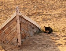Black cat on the golden sand - old boat