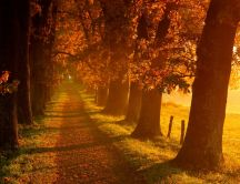 Autumn sunrise in the park - country path in the forest