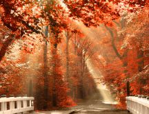 Wonderful road through the red forest - Autumn season
