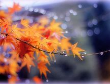 Autumn branch of tree in a cold morning - HD wallpaper