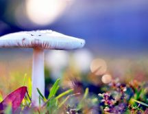 White mushroom - wonderful background