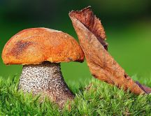 Big mushroom and an Autumn leaf - HD wallpaper