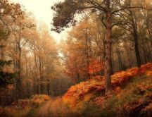 Wonderful Autumn season wallpaper - Path in the forest