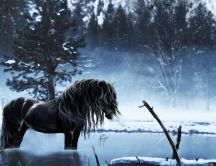 Beautiful horse in a frozen lake - Winter season