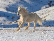 Free horse in the nature - White wallpaper