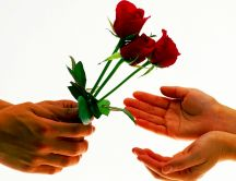 Three lovely red roses - I love you Valentines Day