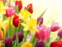 Colorful wallpaper - Wonderful spring flowers