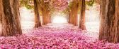 Wonderful pink path under the blossom trees - Spring season