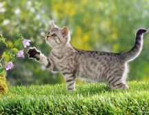 Little tiger cat play with flowers - HD spring wallpaper