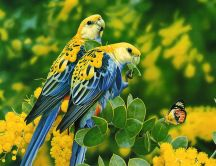 Two wonderful parrots in the jungle - Nature wallpaper