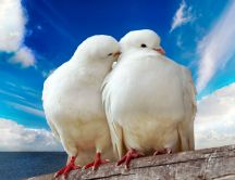 Two lovely doves near the sea - HD wallpaper