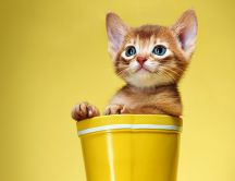 Little cat in a yellow boot - HD funny wallpaper
