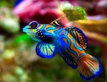 Amazing blue and orange fish - Colors in the water