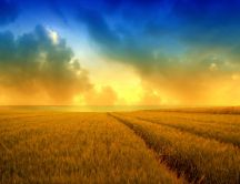 Golden wheat field and a beautiful summer sky