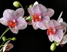 Wonderful Orchid flower white with purple and pink dots