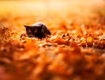 Scared cat on a carpet made from Autumn leaves
