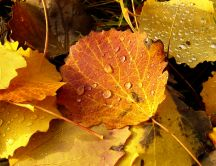 Macro water drops on the Autumn leaves - New season