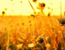 Autumn plants on the golden field - Macro nature wallpaper