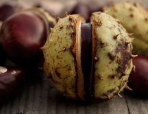 Macro Chestnut wallpaper - The Autumn delicious fruit