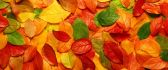 Autumn carpet made from colorful leaves - HD wallpaper