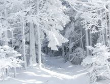 White snow in the forest - Wonderful winter season
