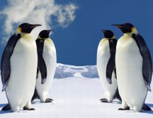 Penguins talking about winter - HD wild animals