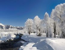 Cold mountain river and wonderful white trees full with snow
