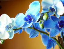Wonderful blue orchid flower in the sunlight - HD wallpaper