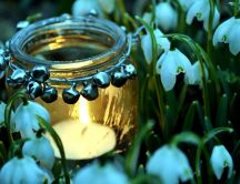 Candle in a jam in the middle of snowdrops