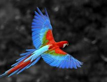 Wonderful parrot in the air - Fly bird fly